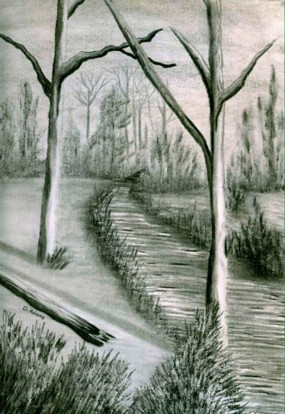 Trees Along Path_charcoal_by-d-adams_2008 - Copy