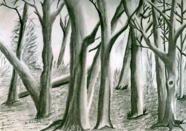 Trees_charcoal_by-d-adams_2008 - Copy