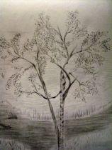P_Birch Trees