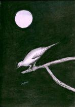 P_Bird in the Night