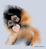 P_Squirrel Monkey #1