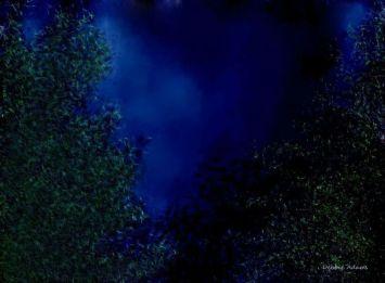 L_Tree Tops