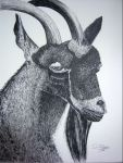 P_Billy Goat