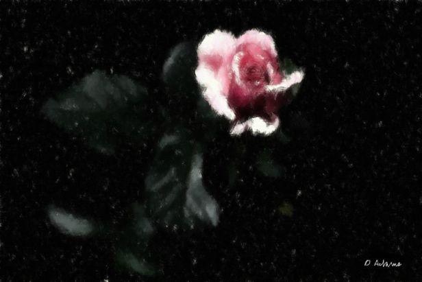 L_Pink Rose
