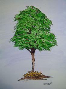 P_Summer Tree