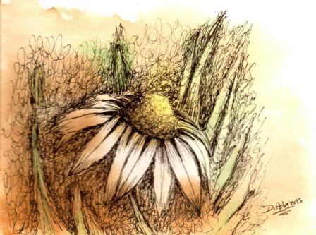 L_Daisy_ink_watercolors