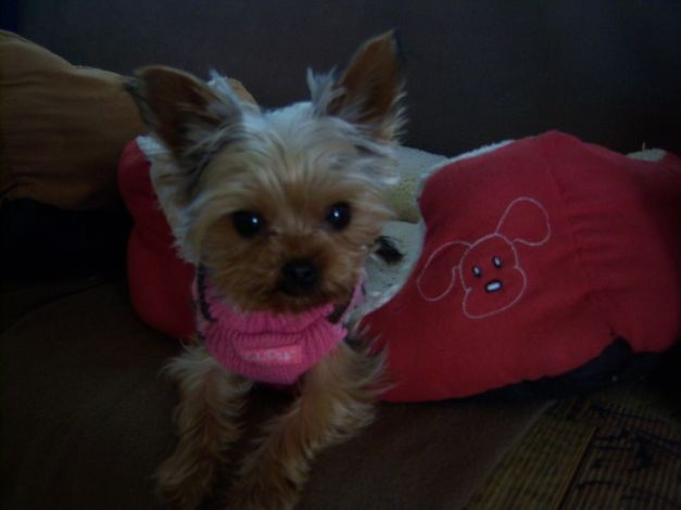 Cici Wearing Her Pink Sweater