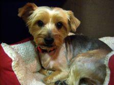 Cassie-10-2012