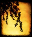 silhouette-branch - Copy