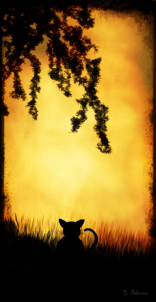 Silhoutte-nature-cat-signed