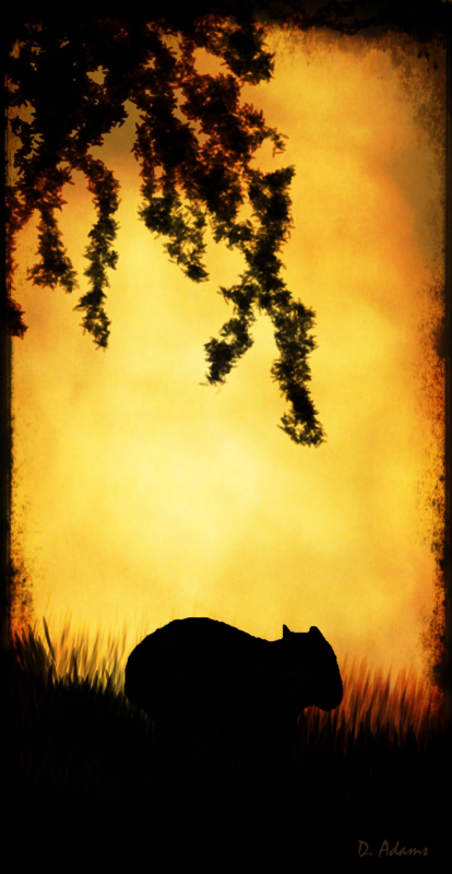 Silhoutte-nature-wombat-2 - Copy (2)