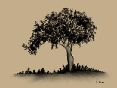 Tree-charcoal-digital-2013-05-02 - Copy