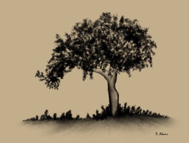 Tree-charcoal-digital-2013-05-02 - Copy