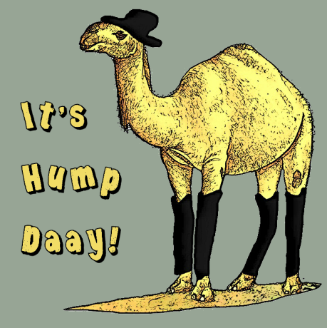 camel-hump-day